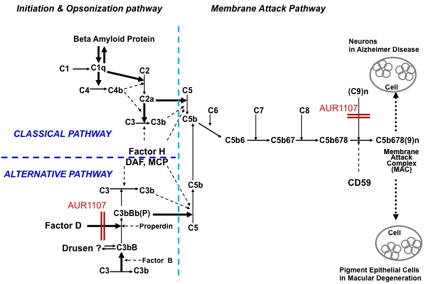 Schematic illustration of the classical and alternative pathways of complement.